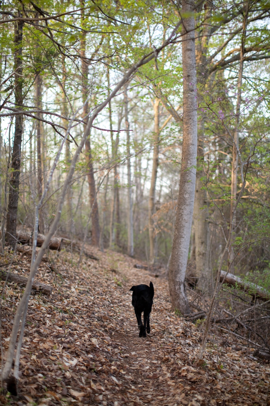 A walk in thewoods.