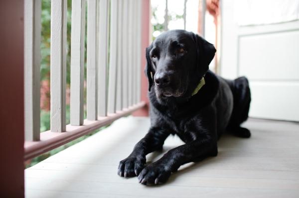 Dog Friendly Porches