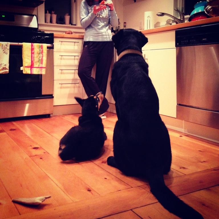 Teaching the Art of Begging